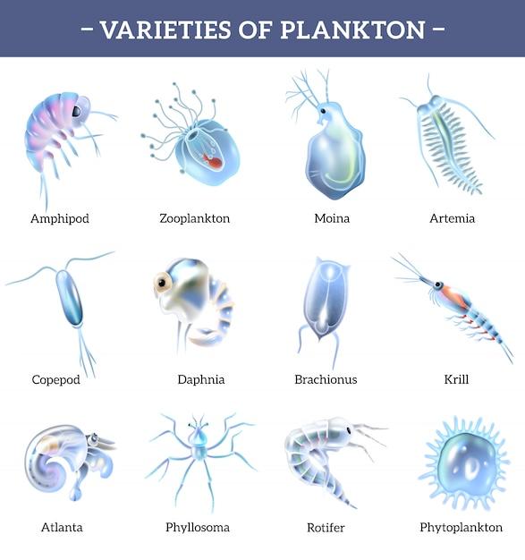 テキスト説明漫画イラスト入りプランクトン分離アイコンの種類 無料ベクター