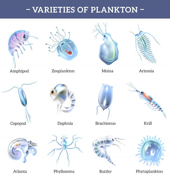 Le varietà di icone isolate plancton hanno messo con l'illustrazione del fumetto di spiegazione del testo Vettore gratuito