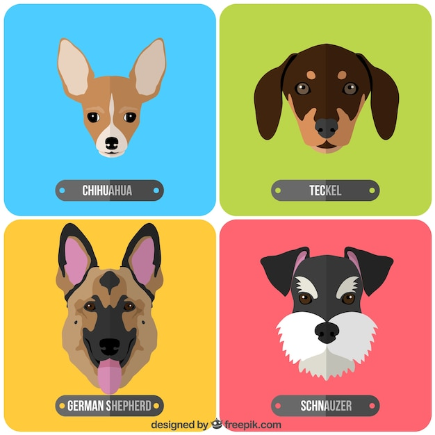 Variety of dog breeds Free Vector