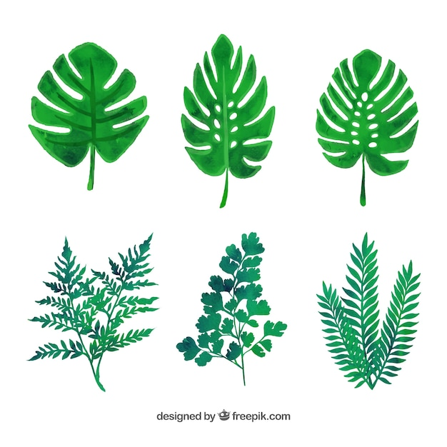 Leaf set free vector in adobe illustrator ai (. Ai ), encapsulated.