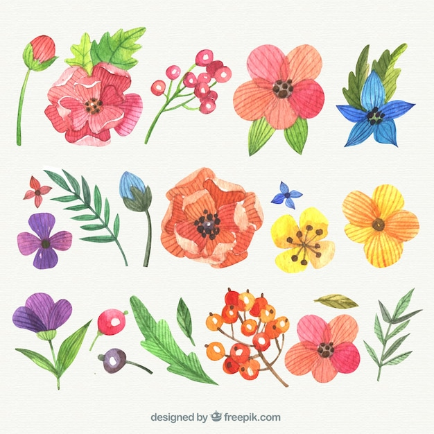 Variety of hand painted flowers Free Vector