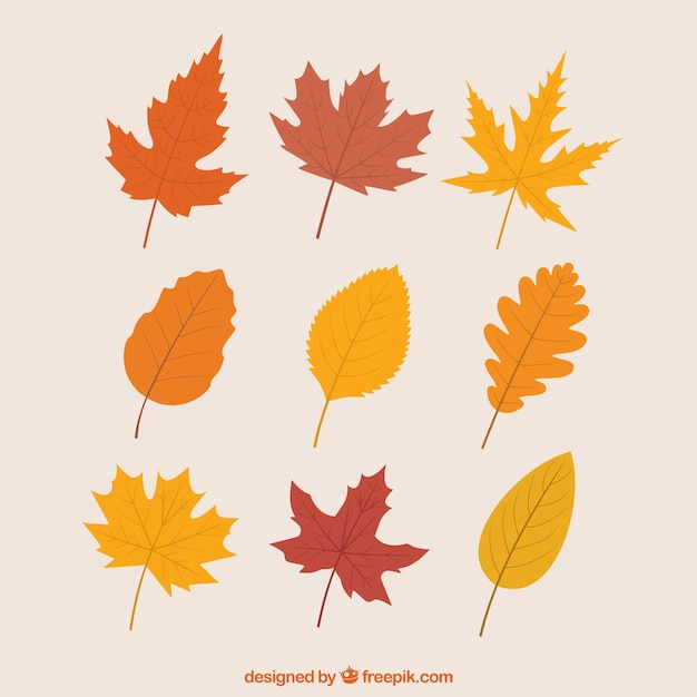 Variety of autumnal leaves Free Vector
