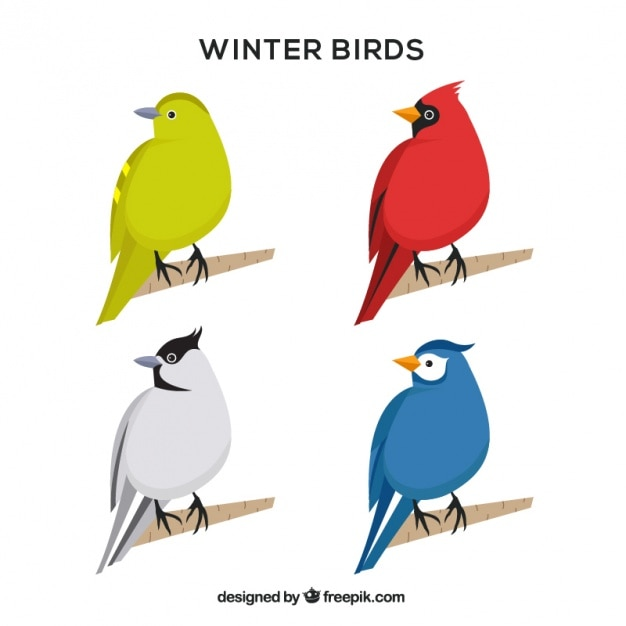 Variety of colorful winter birds