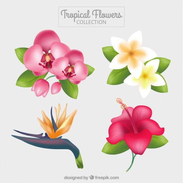 Variety of cute exotic flowers