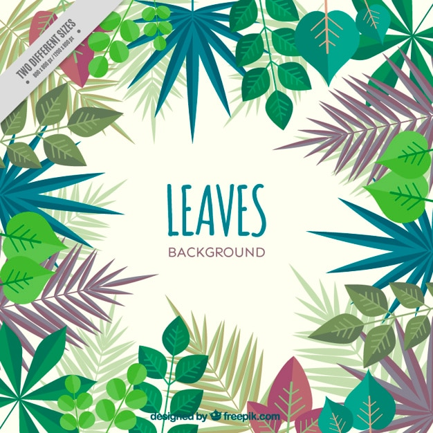 Variety of cute leaves and palm leaves\ background