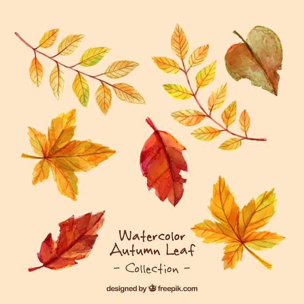 Variety of dry leaves in watercolor effect Free Vector