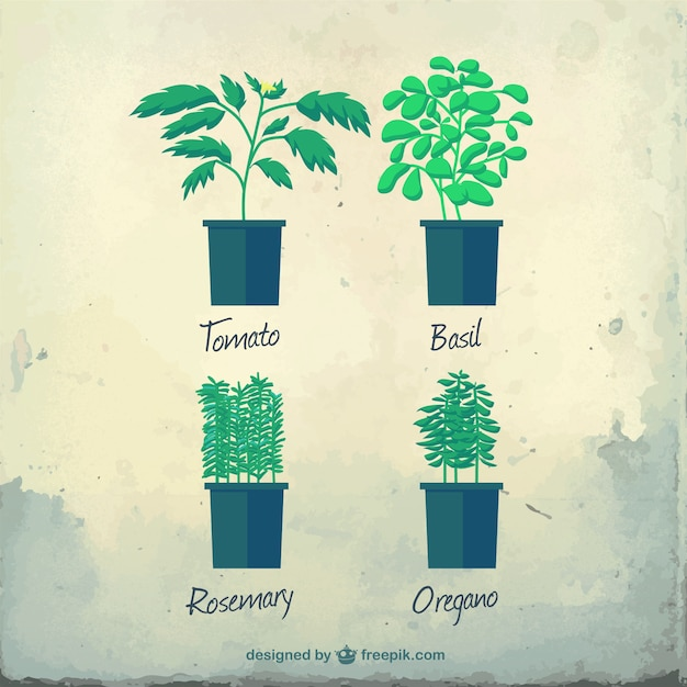 Variety of herbs Free Vector