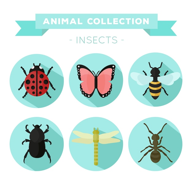 Variety of insects in flat design