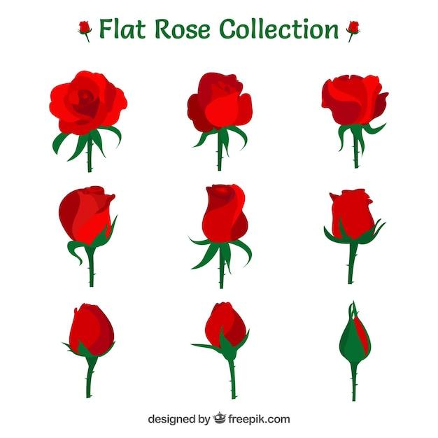 평면 디자인의 9 개의 빨간 장미의 다양한 프리미엄 벡터