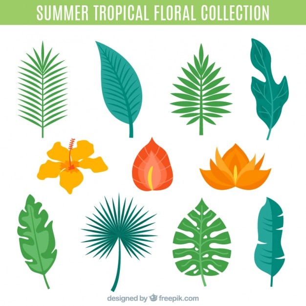 Variety of palm leaves and tropical flowers set Vector ...