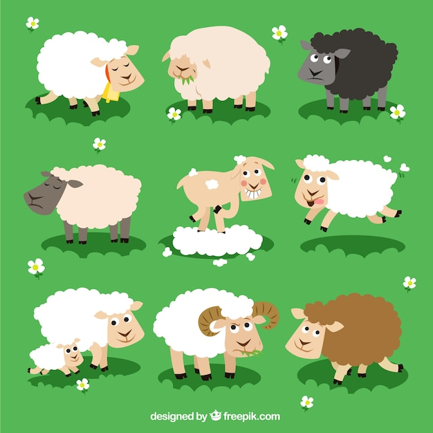 Variety of sheeps Free Vector