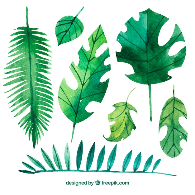 Free Vector Variety Of Watercolor Palm Leaves Perfect for tropical or luau themed party. vector variety of watercolor palm leaves