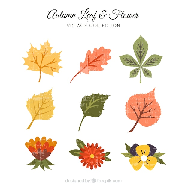 Various autumn leaves and decorative flowers