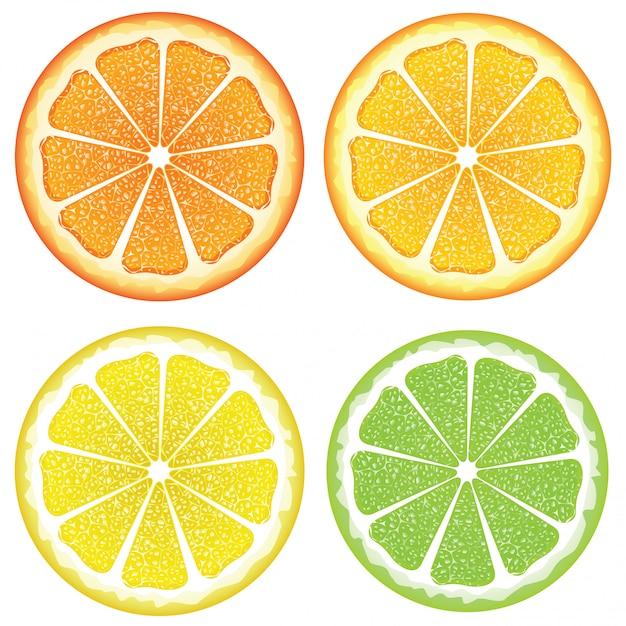 Various citrus slices Premium Vector