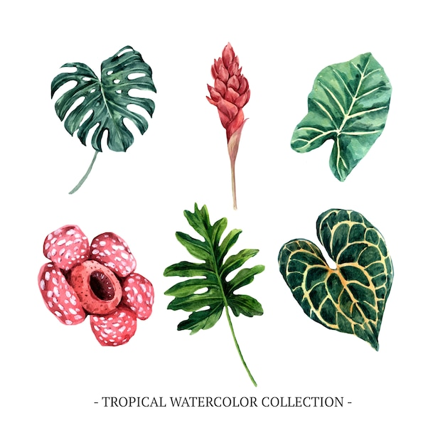Various isolated watercolor foliage illustration on white background for decorative use. Free Vector