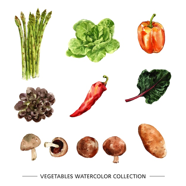 さまざまな孤立した水彩野菜 無料ベクター