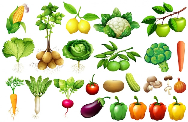 Various kind of vegetables illustration Free Vector