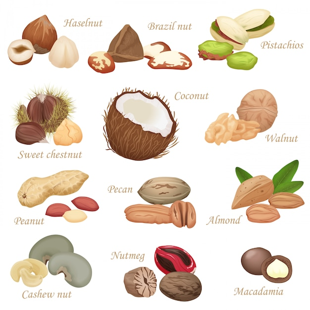 Various realistic nuts and seeds set Premium Vector