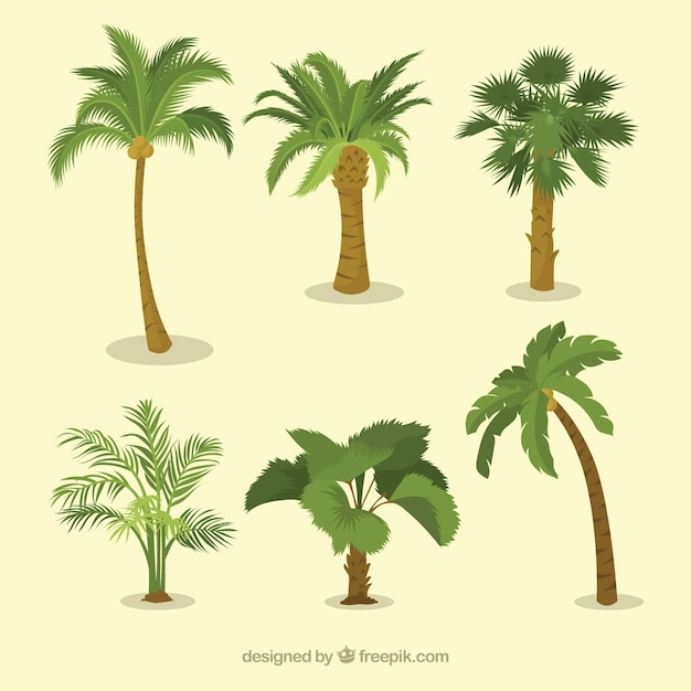 Various types of palm trees Free Vector