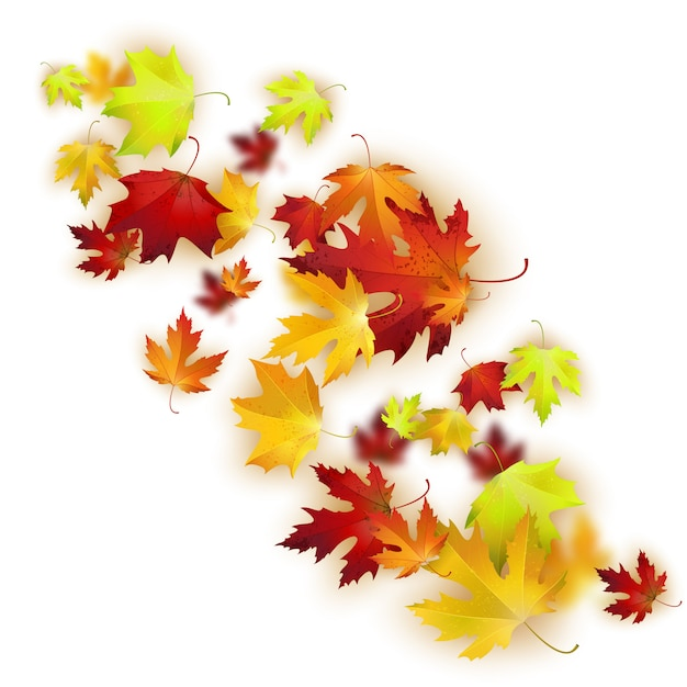 Vector background with colorful autumn leaves Premium Vector
