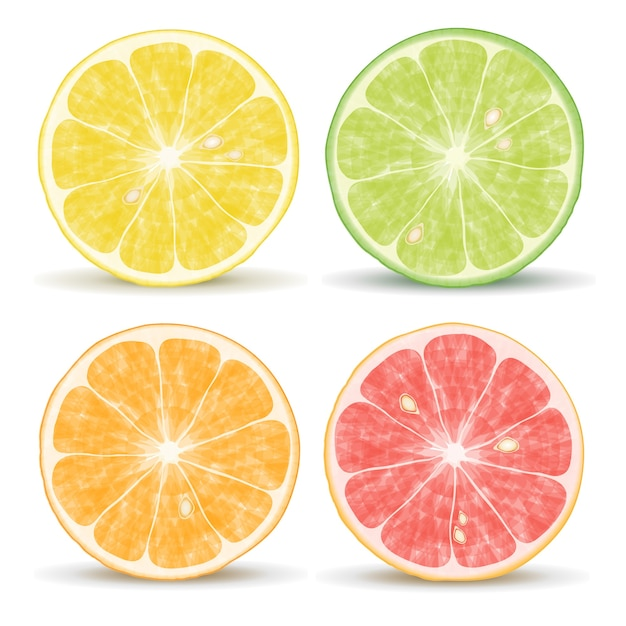 Vector citrus fruits: orange, lime, grapefruit and lemon Free Vector