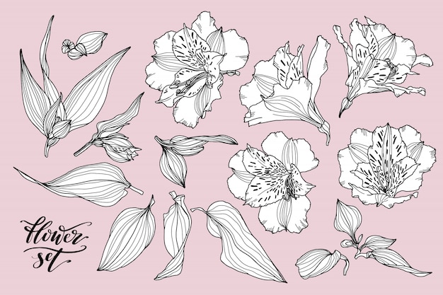 Vector collection of hand drawn flower elements. Premium Vector