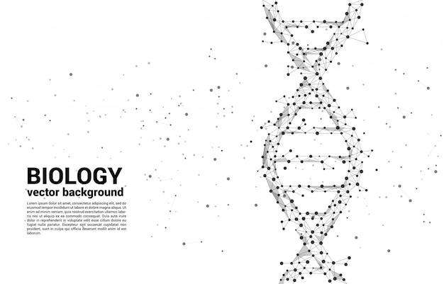 Генетическая структура днк вектора от точки соединяет линию полигон. фон концепции для биотехнологии и биологии научных. Premium векторы