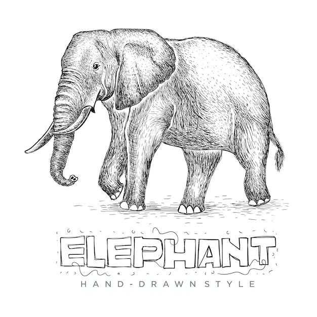 ベクトル象ウォーキング、手描きの動物のリアルなイラスト Premiumベクター