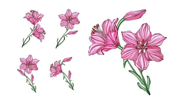 Vector flower arrangements with lily flowers Premium Vector
