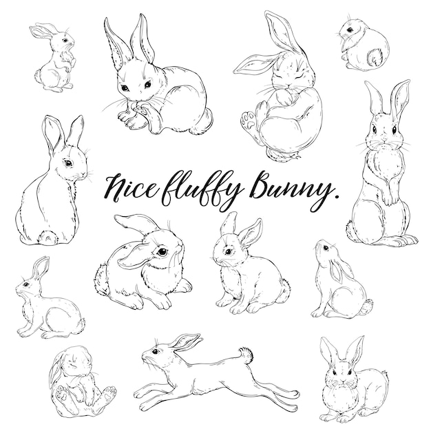 Vector graphic of a cute fluffy bunny Premium Vector