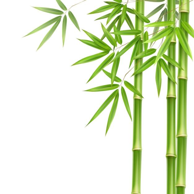 벡터 녹색 대나무 줄기와 잎 복사 공간 흰색 배경에 고립 무료 벡터