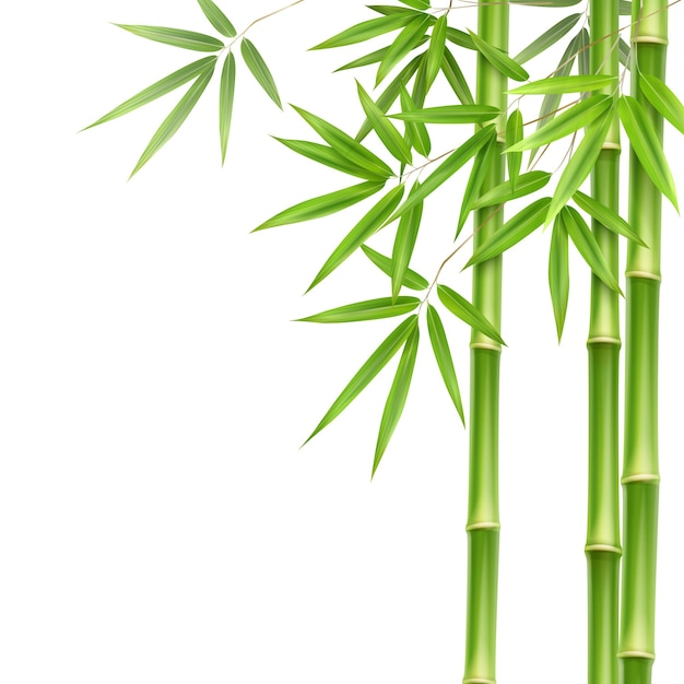 Vector green bamboo stems and leaves isolated on white background with copy space Free Vector