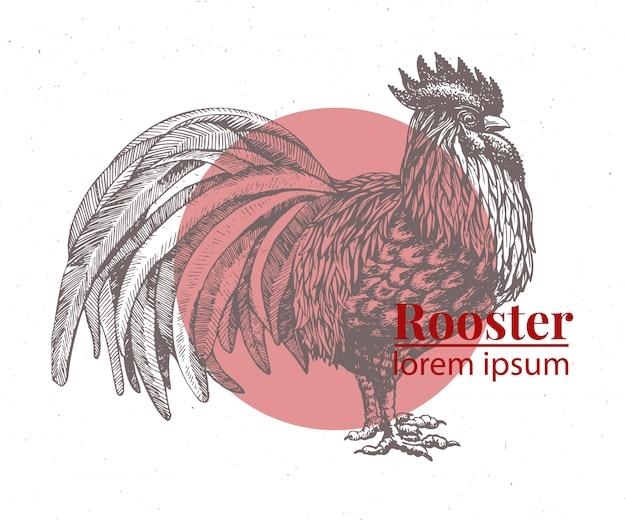 Vector hand drawn chicken illustration. Premium Vector