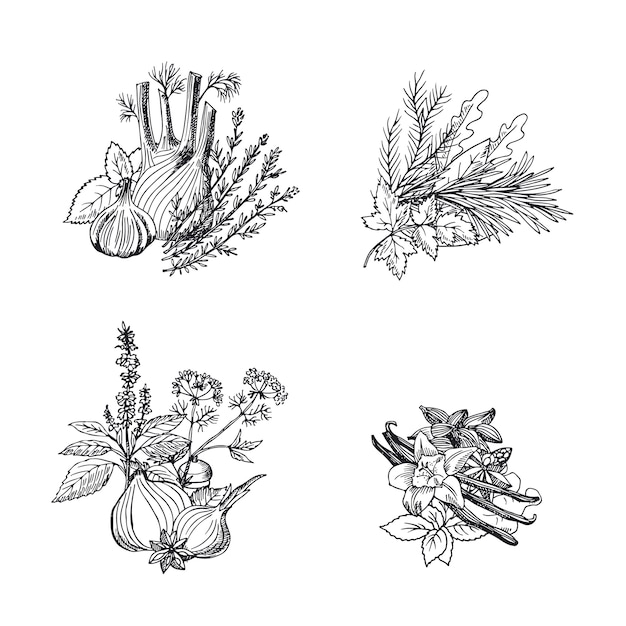 Vector hand drawn herbs and spices piles set Premium Vector