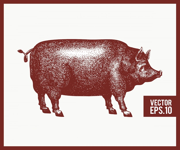 Premium Vector Vector Hand Drawn Illustration Of Black Pig Silhouette Retro Engraving Style Sketch Farm Animal Drawing Check out our pig silhouette selection for the very best in unique or custom, handmade pieces from our collage shops. https www freepik com profile preagreement getstarted 4257758