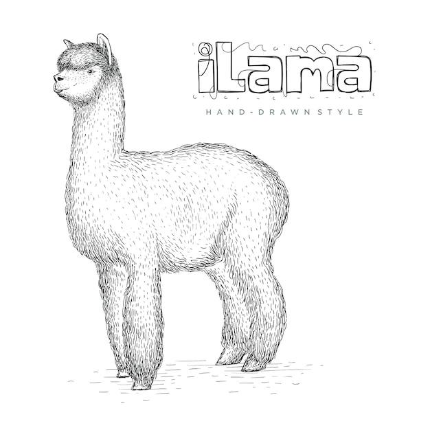 手描きスタイル、リアルな動物イラストのベクトルイラマ Premiumベクター