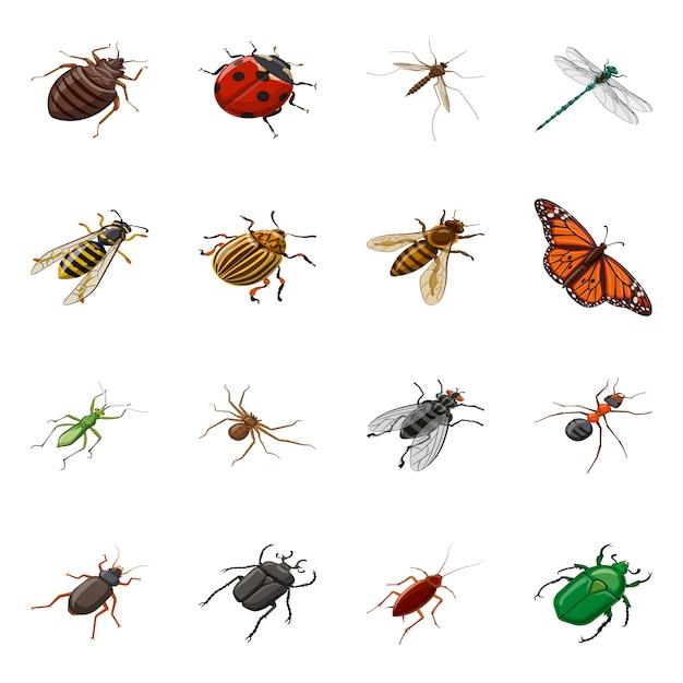 Векторная иллюстрация насекомых и летать иконы. коллекция насекомых и энтомология набор Premium векторы