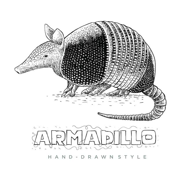 アルマジロのベクトル。手描きのリアルな動物イラスト Premiumベクター