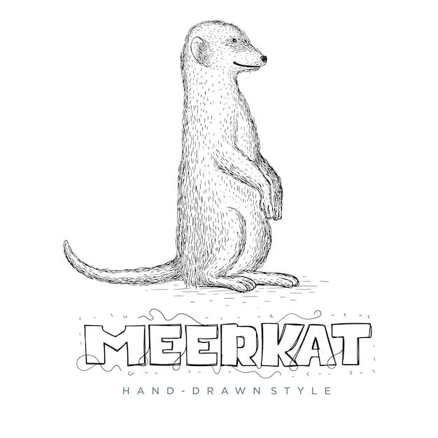 ミーアキャットがまっすぐに立っているのベクトル。手描き動物イラスト Premiumベクター