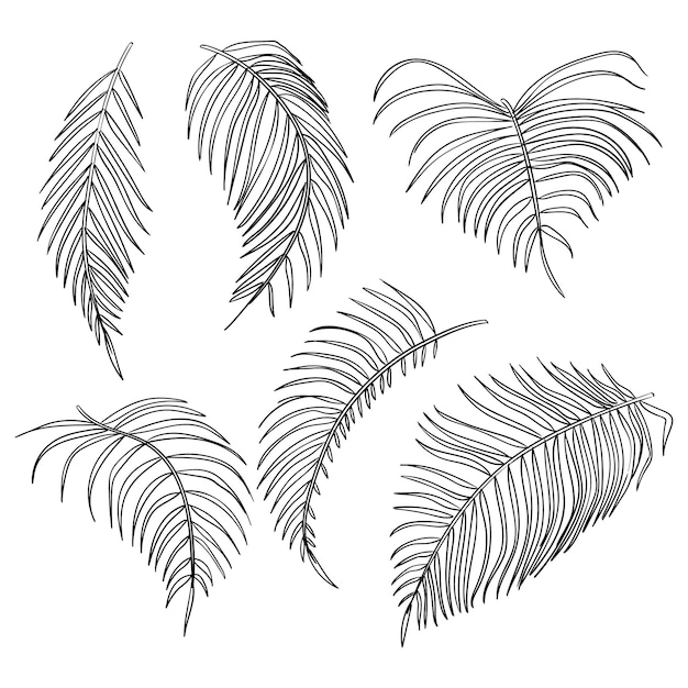 Vector palm leaves, jungle leaf set isolated on white background Premium Vector