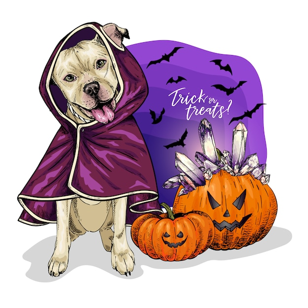 Vector portrait of pit bull terrier dog coat and pumpkins with crystal crown Premium Vector