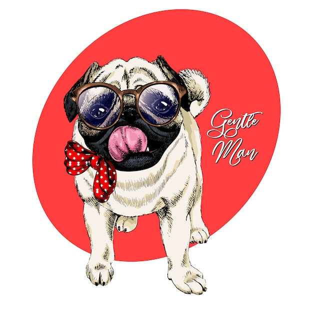 Vector portrait of pug in glasses and tie bow Premium Vector