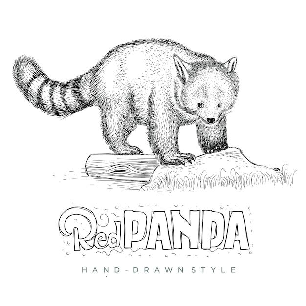 かわいい探しているレッサーパンダをベクトルします。手描き動物イラスト Premiumベクター