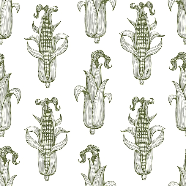 Vector seamless pattern with corn on the cob with leaves. Premium Vector