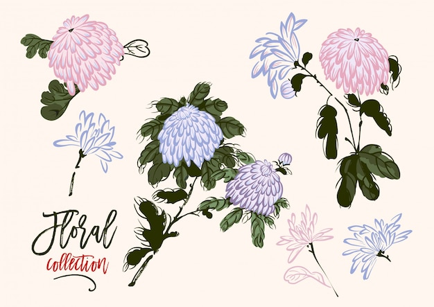 Vector set of blooming chrysanthemum in chinese style Premium Vector