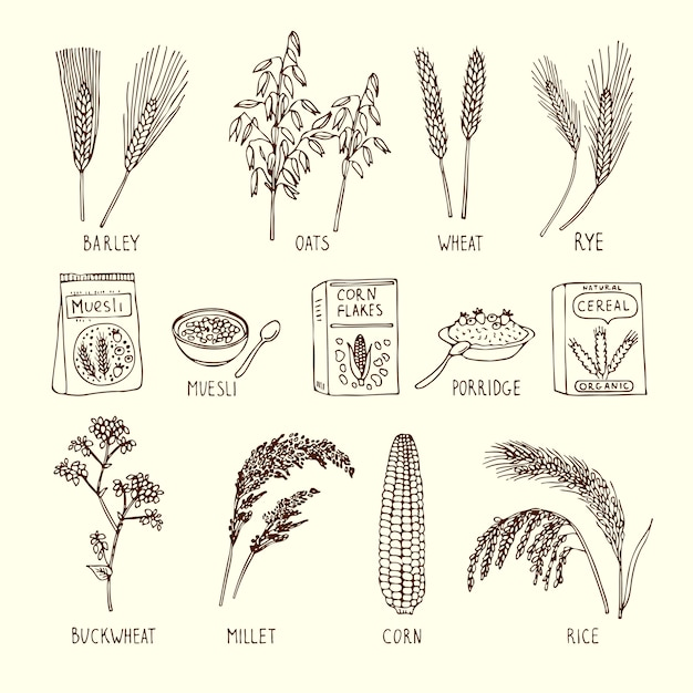 Vector set of different cereals. muesli, wheat, rice and others. Premium Vector