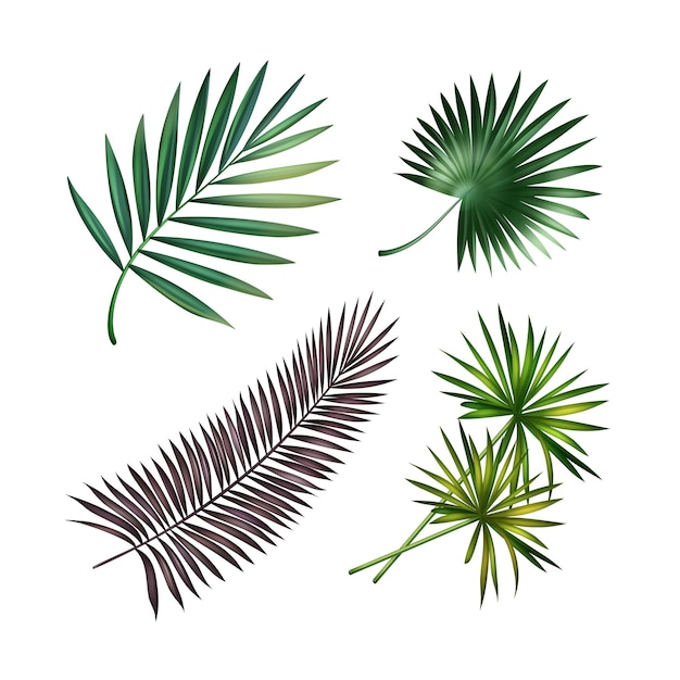 Vector set of green, violet tropical palm leaves isolated on white background Free Vector