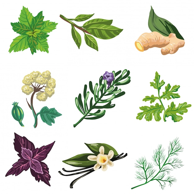 Vector set of herbal and spices. Premium Vector