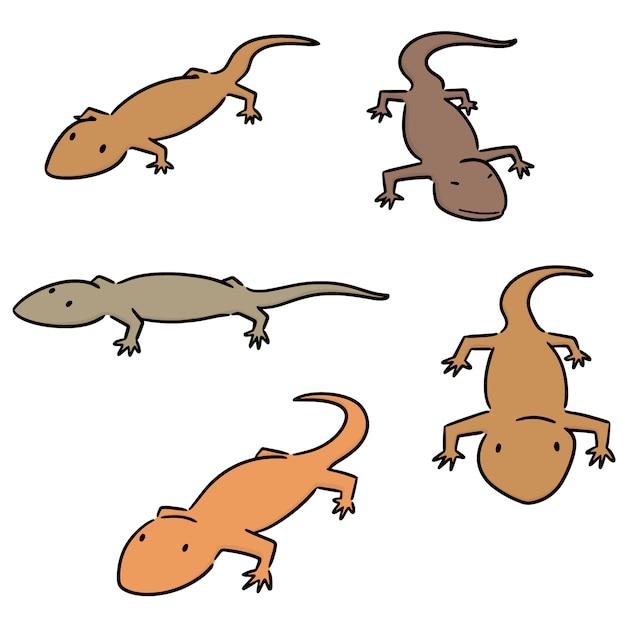 Vector set of lizards Premium Vector