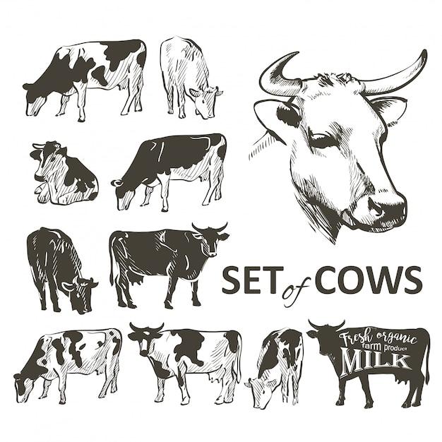 牛のベクトルを設定 Premiumベクター